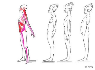 Recuperar l'elasticitat: estiraments de cadenes musculars